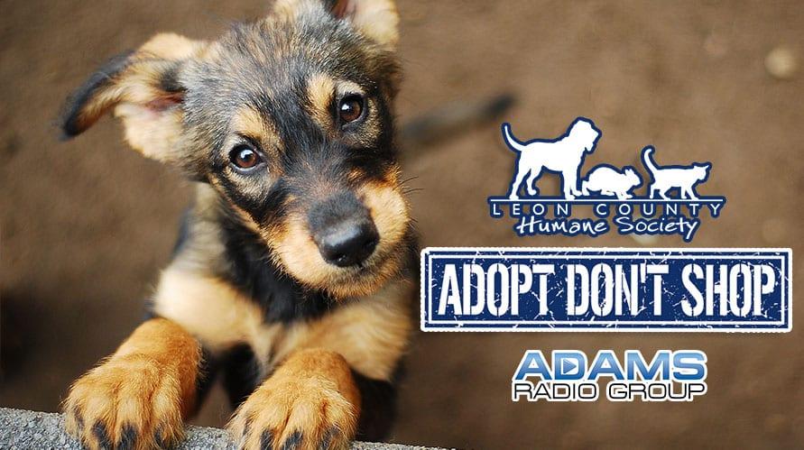 Leon County Humane Society |Zena